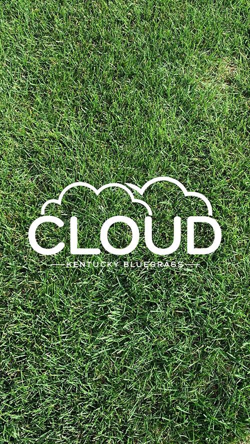 Cloud Kentucky Bluegrass
