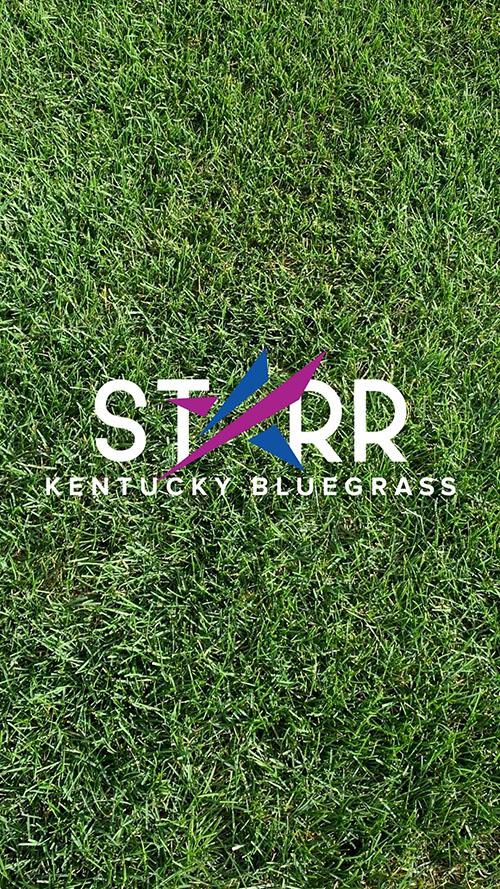 Starr Kentucky Bluegrass