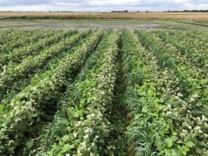 Cover crop bio strip