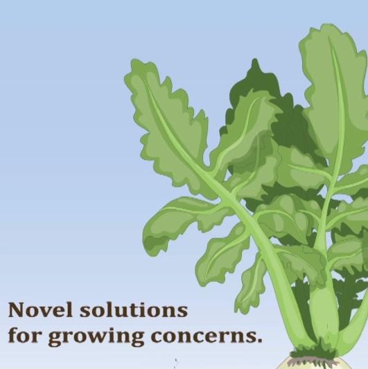 Novel Solutions