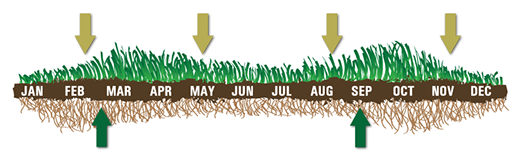 optimum turf planting and fertilization periods