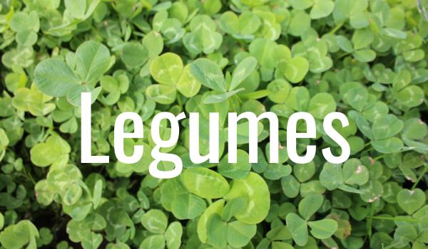 legume extend grazing season