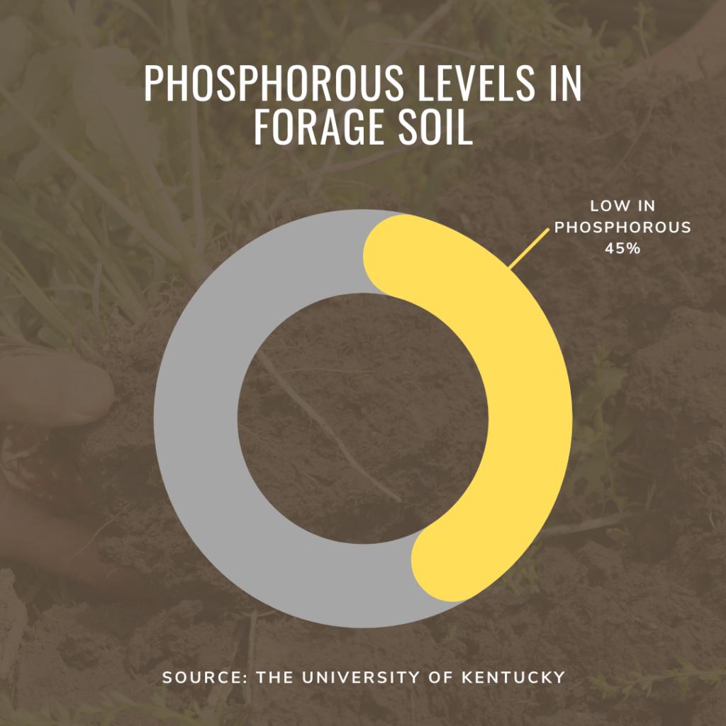 phosphorus levels in soil