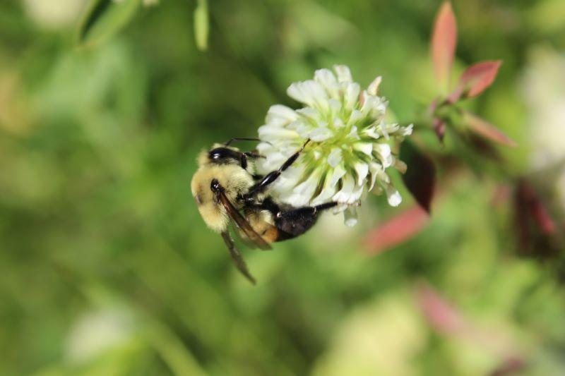 bees like livestock not wildlife