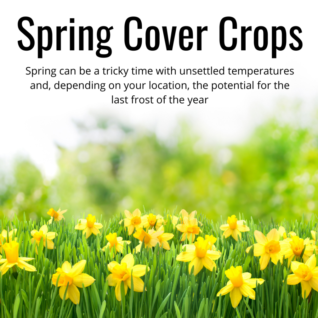 spring cover crops